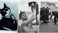 İkinci Dünya Savaşı Sırasında Bindiği Her Geminin Batışından Kurtularak Efsaneleşen Kedi: Batırılamayan Sam