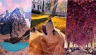 Evlerinize Baharı Getirdik! Baktıkça Etkisinden Çıkamayacağınız Birbirinden Büyüleyici 29 Görsel