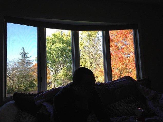 """17. """"Bu pencere arka bahçemde dört mevsim yaşanıyormuş gibi gösteriyor."""""""
