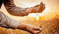 Lokal Üreticiden Doğrudan Tüketiciye Doğal ve Taze Gıda Ulaştıran Online Bir Pazar: tapptaze