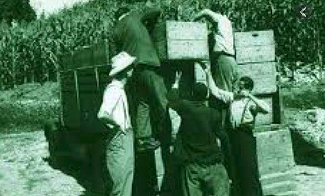 Ardından 1923 yılında çay ve narenciye fidanlığı kurmak üzere Rize'ye gönderildi.
