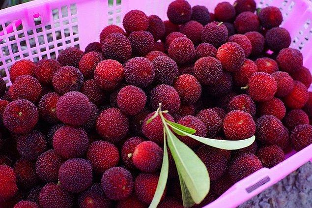 8. Chinese Bayberry
