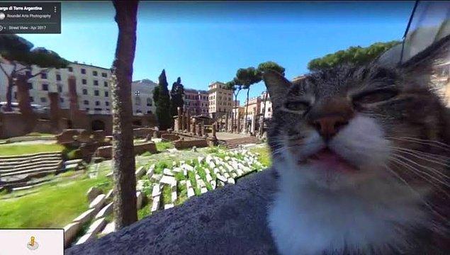 10. Kedi selfiesi.