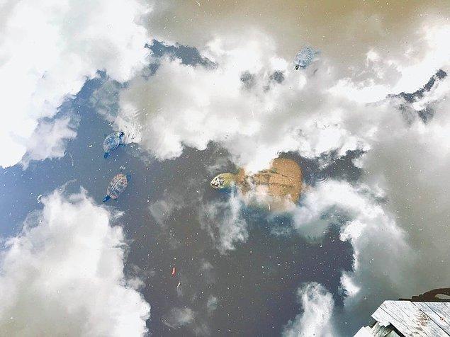 5. Kaplumbağalar gökyüzünde yüzüyor.