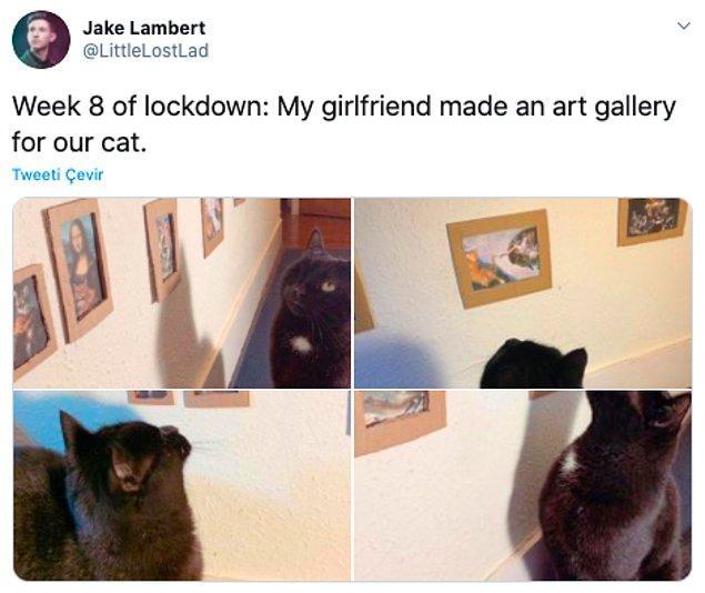 """2. """"Karantinada 8. hafta: Kız arkadaşım kedimiz için sanat galerisi yaptı."""""""