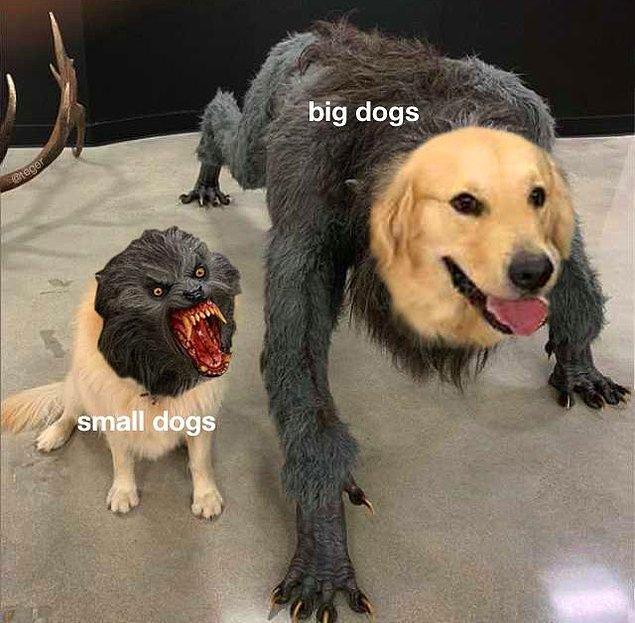 """11. """"Küçük köpekler ve büyük köpekler"""""""
