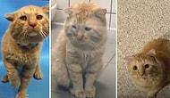 Barınaktan Sahiplenildikten Sonra İyi İnsanların Yanında Muhteşem Bir Değişim Geçiren Kedi