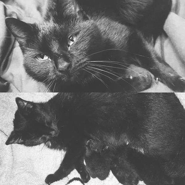 3. Mia ve onun bebekleri