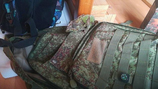 1. Kamuflaj sırt çantasının üzerindeki bukalemun işte böyle görünüyor: