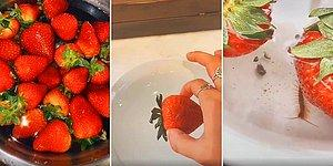 Tuzlu Suda Bekletilince İçinden Böcek Çıkan Çilek Videosu Sosyal Medyayı Salladı