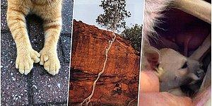 Hayattaki İlginç Şeylere Karşı İçinizi Merakla Dolduracak 22 Harika Fotoğraf