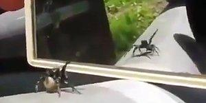 Aynada Kendisini Gören Örümceğin Dans Ettiği Anlar