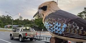 Karantina Altındayken Devasa ve Gülen Kookaburra Kuşu Yapan Adam