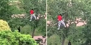 Sokağa Çıkma Yasağında Güvenlik Güçlerinden Ağaca Tırmanarak Saklanan Genç