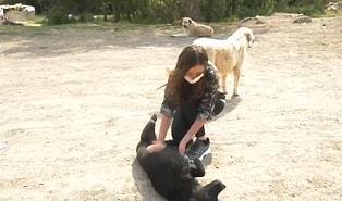 Ankara Büyükşehir Belediyesi'nden Pandemi Sürecinde Yaban ve Sokak Hayvanlarına 461 Ton Mama