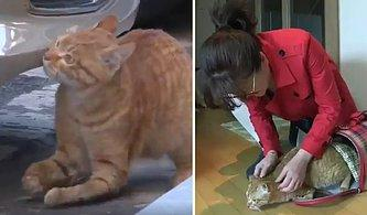 Sokakta Yaşayan Engelli Kediyi Sahiplenerek Sıcak Bir Yuvaya Kavuşturan Güzel İnsan