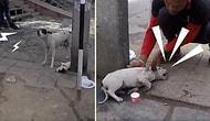 Yaralı Yavrusu İçin Yardım Çığlığı Atan Köpek ve Ona Yardım Elini Uzatan Güzel İnsanlar