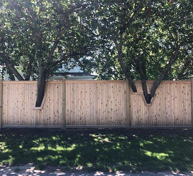 5. Ağaçları kesmeden de çit çekilebileceğinin kanıtı olan bu tasarım: