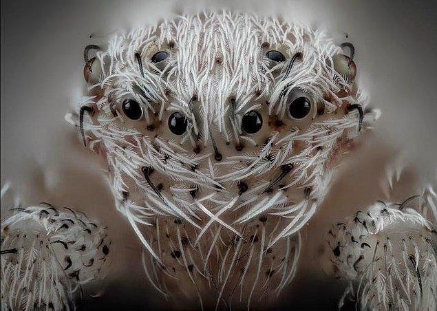 1. Tüylerimizi diken diken eden bir örümcek: