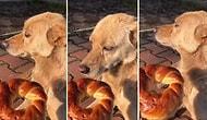 Pazar Günü İşe Gelmeyip, Yemek Getirmediği İçin İnsan Dostuna Trip Atan Sokak Köpeği