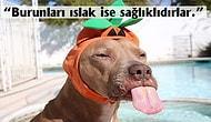 Her Duyduğunuza İnanmayın! Köpeklerle İlgili Çok Yanlış Bildiğiniz Birbirinden Şaşırtıcı Gerçekler