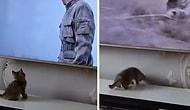 Televizyonda İzlediği Kişi Aşağı Atlayınca Evin İçinde Adamı Arayan Minnoş Kedi