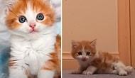 Felçli Kediyi Sahiplenip Yürümeyi Öğreten Müthiş İnsan
