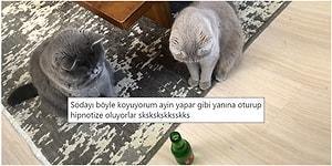Kedilerin Tek Bir Bakışlarıyla Bile Moralimizi Yükselten Canlılar Olduklarını Kanıtlayacak 17 Paylaşım