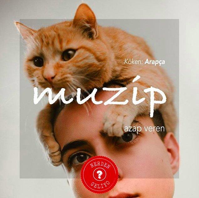 12. Muzip