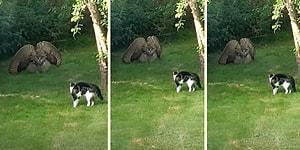 Baykuş ile Kedinin Karşı Karşıya Geldiği Bir Hayli Gergin Anlar