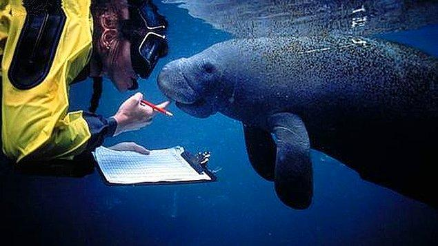 6. Deniz biyoloğu:
