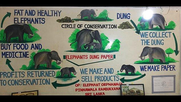 10. Hindistan'da fil dışkısından kağıt ürünler üreten bir şirket var.