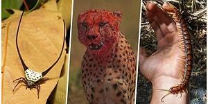 Doğanın Korkutucu Yüzünü İliklerinize Kadar Hissetmenize Sebep Olacak Birbirinden Ürkütücü 17 Yeni Fotoğraf