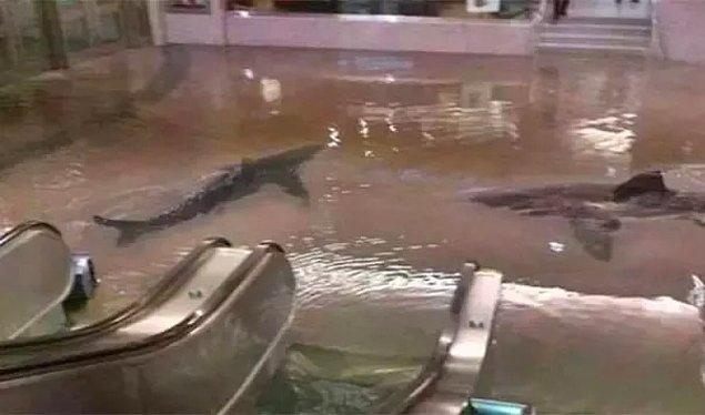 12. Kuveyt'te köpek balıklarının olduğu akvaryumun patlamasıyla ortaya çıktığı söylenilen bu fotoğraf da photoshoplanmış.