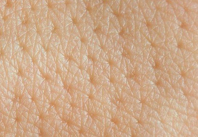 12. Her saat 30.000-40.000 ölü deri hücresini atarız. Bu da 24 saat içerisinde bir milyon civarında hücre demektir.