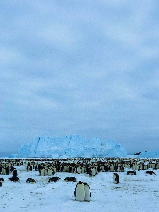 """""""Bu sabah penguenlerin kolonisini ziyaret ettik."""""""