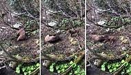 Artvin'de Avcılar Bir Ayı Yavrusunu Vurup Köpeklere Parçalattılar
