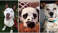 Gördüğün Anda Kalbinizden Bir Okla Vurulmuşa Döneceğiniz Birbirinden Değişik Köpek Irkları