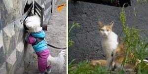 İnsan Dostu ile Birlikte Sokak Kedilerini Kurtarmayı Görev Edinen Köpek