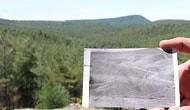 799 Bin Kızılçam Fidanı Dikilmişti: Sinop'taki Çorak Arazi, 40 Yılda Ormana Dönüştü
