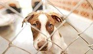 Tüm Taleplere Rağmen 'Hayvan Hakları Yasası' Neden Çıkmıyor?