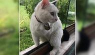 İnsanlığımızı Kaybedeli Çok Oldu: Sakarya'da Engelli Kedi 'Sütlaç'ı Silahla Vurarak Öldürdüler...