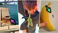 Avustralya'nın Düşünüldüğü Gibi Bir Masal Ülkesi Olmadığını Gösteren Birbirinden Acayip 19 Fotoğraf