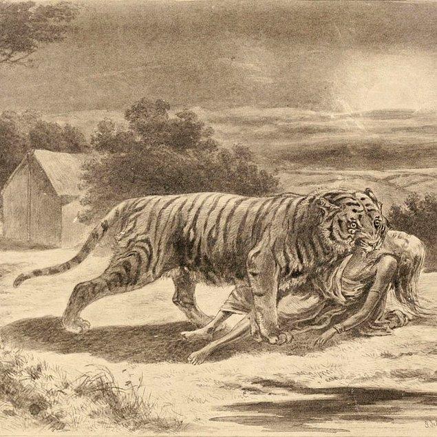 """12. """"Champawat Kaplanı"""" olarak adlandırılan dişi bir Bengal kaplanı, tam 436 insanı öldürmüştür."""