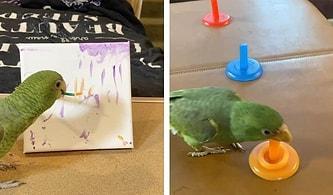Uçmaktan Korkan Amazon Papağanına Resim Yapmayı, Basketbol Oynamayı ve Daha Birçok Şeyi Öğreten Kadın