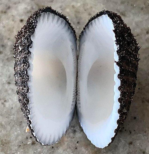 8. Deniz kabuğunun mu hindistan cevizinin mi içi siz karar verin.