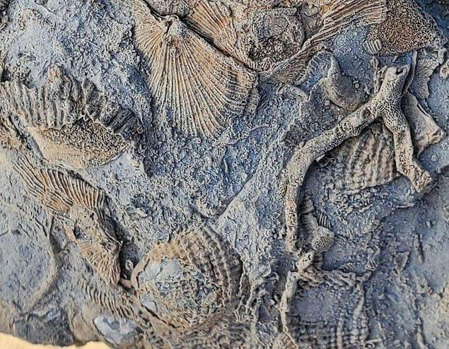 """20. """"Deniz seviyesinden yaklaşık 4 kilometre yukarıda bulduğum fosil topluluğu."""""""