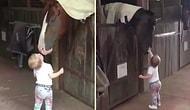 Tek Tek Atlara Dokunup Öperek Sevgi Dağıtan Ufaklığın Gözlerinizden Kalpler Fışkırtacak Görüntüleri