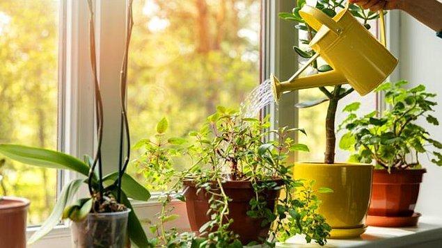 1. Pencere önü çiçekleri