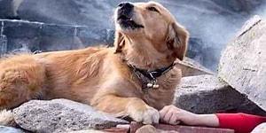 Nice Canlar Kurtardılar! Emniyet Teşkilatının Gizli Kahramanları K-9 Köpekleri Uyuşturucu Verilerek mi Eğitiliyor?